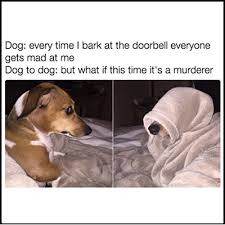 Laugh Out Loud Meme - 22 dog memes that will make you laugh out loud buzzwoof by