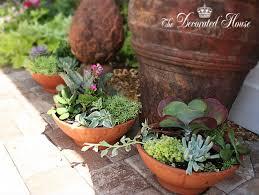 Dish Garden Ideas 15 Fantastic Succulent Garden Ideas For Your Home