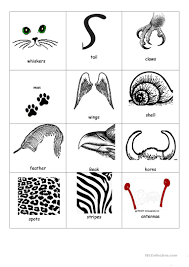 34 free esl animal body parts worksheets