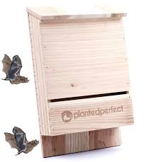 house pest control bat house pest control bats shelter protects home from mosquitoes