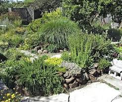 northern california drought resistant plants northern california