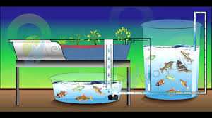 what is a chop aquaponics system youtube