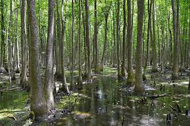 Arkansas forest images Forest bathing is the next big thing visit arkansas arkansas jpg