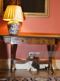 larry the new downing street cat arrives at his new home photos