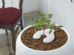bios urn bios urn the startup that lets you grow a tree from human ashes
