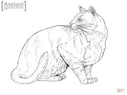 100 persian cat coloring pages pictures of owls for kids