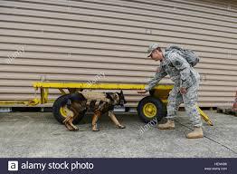 belgian shepherd us army u s army spc jacob rodriguez military dog handler and eros a