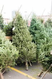 christmas tree farm sed bona
