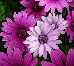 purple flower 36 best hd purple flower wallpapers