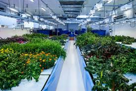 what is the best lighting for growing indoor led grow lights getting the right color spectrum garden