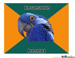 Paranoid Parrot Memes - paranoid parrot s arm starts to hurt by pwnering meme center
