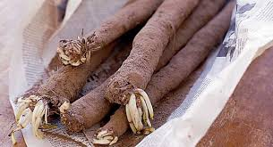 Chinese Root Vegetables - salsify bbc good food