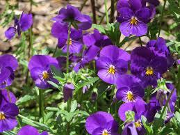 Australian Garden Flowers by Summer Garden Capital Life And Random Beauty U2026