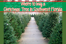 where to buy a christmas tree in southwest florida mom explores