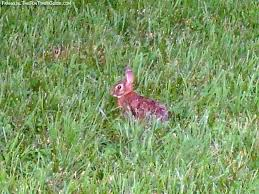 Tennessee wildlife images Franklin tennessee wildlife as close as your own backyard the jpg