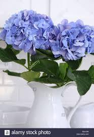 Hydrangea Flowers Hydrangea House Stock Photos U0026 Hydrangea House Stock Images Alamy