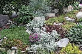 Rock Garden Plants Uk Rock Garden Plants Rock Rock Garden Rock Garden Plants For Shade
