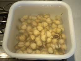 cuisiner des coques cuisine facile com comment préparer des coques