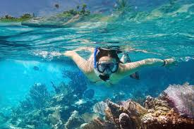 Florida snorkeling images Snorkeling at sanibel island florida jpg