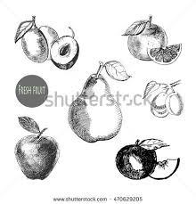 sketch citrus fresh organic orange vector stock vector 380949934