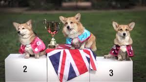 corgis race to u0027reveal u0027 name of prince william u0027s and duchess