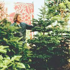 Planting Christmas Tree Seedlings 11 Sustainable Christmas Tree Choices Sunset Magazine