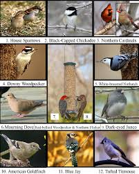 wild birds unlimited most common winter birds in michigan