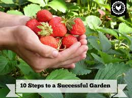 wonderful design how to start a vegetable garden from scratch