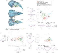 cranial shape evolution in adaptive radiations of birds