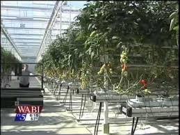 Backyard Farms Backyard Farms Greenhouse Expansion Youtube