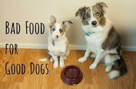 are onions for dogs 10 common foods that can kill your pethelpful