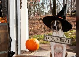 Pet Halloween Costumes 2017 Top Pet Halloween Costumes