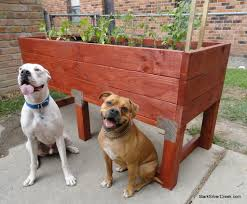 build a doggie proof vegetable planter box stark insider