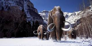 woolly mammoth extinction cloning process photos business