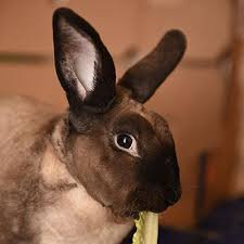 rabbit bunny adopt a rabbit best friends animal society