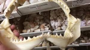 hd u0026 4k mako shark videos videoblocks royalty free mako shark