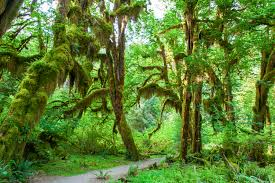 Washington forest images Hoh rain forest the seven wonders of washington state jpg