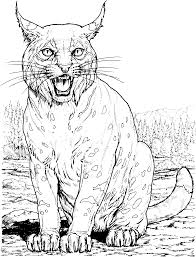 drawn lynx simple pencil and in color drawn lynx simple