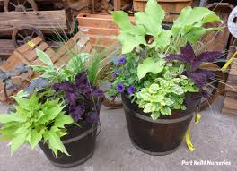 shade to part shade container using a mix of perennial water and