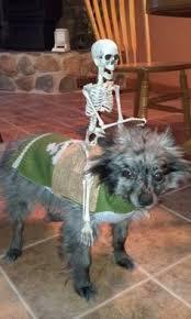 Dog Costume Halloween Diy Sushi Dog Costume Cuddles Awesome Costumes