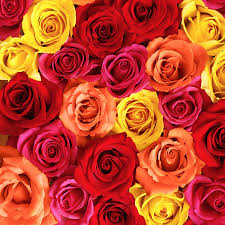 The Language Of Flowers Flower Meanings Learn The Language Of Flowers Hallmark Ideas