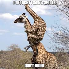I Saw A Spider Meme - spider scare imgflip