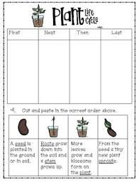 best 25 teaching plants ideas on pinterest lifecycle of a plant