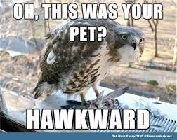 Funny Bird Memes - funny animal memes animal meme hawk bird funny pics pictures pic