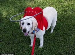 Pictures Of Blind Dogs Blind Dogs Are Given New Lease Of Life With A U0027halo U0027 Daily Mail