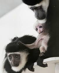 fort wayne children u0027s zoo zooborns