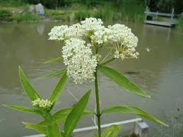 native plants names native plants koi fish game fish for sale national pond service