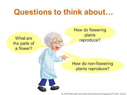 flowering and non flowering plants ppt video online download