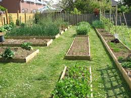 tips about vegetable gardening for beginners steps above view