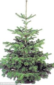 How Much Are Real Christmas Trees - aldi triggers christmass tree price battle with 6ft nordman fir